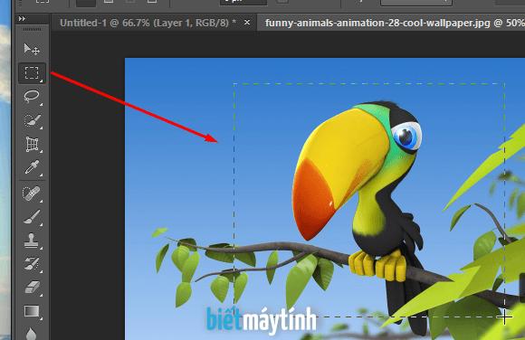 cách cắt ảnh/crop ảnh trong photoshop