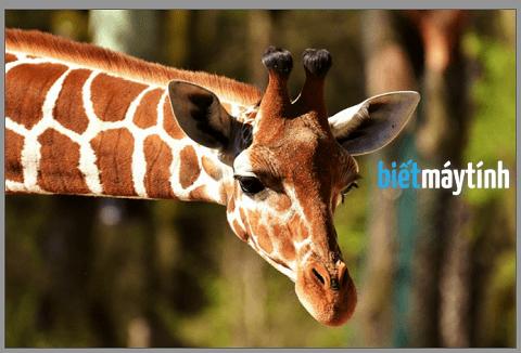 Cách xoay ảnh bằng phần mềm chỉnh sửa ảnh online
